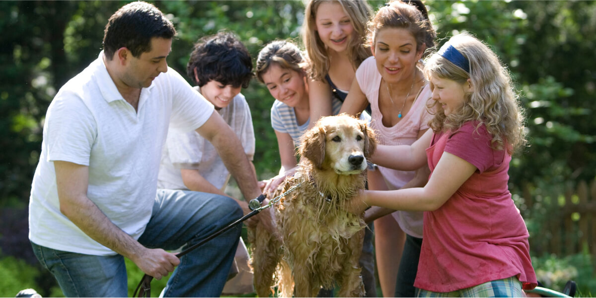 How to engage the whole family in pet-caring