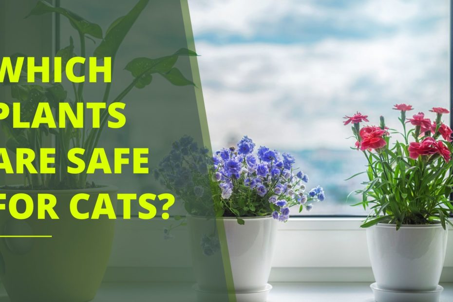 Planting House Plants for a Cat: Which Plants Are Safe and Which Should Be Avoided?